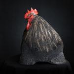 Coq Darius (3)